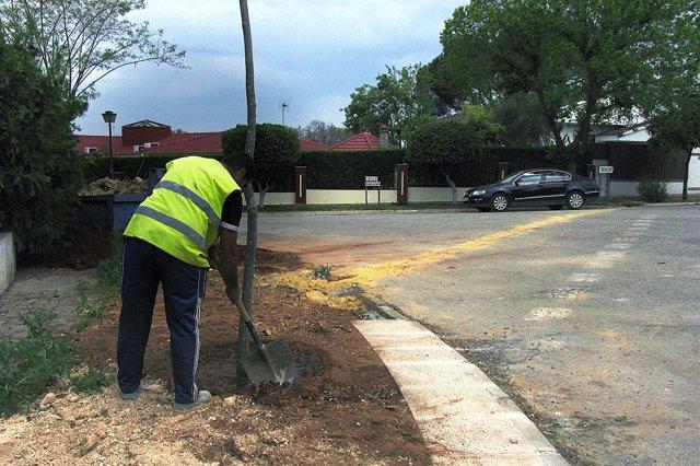 Plantación de árboles en Mairena