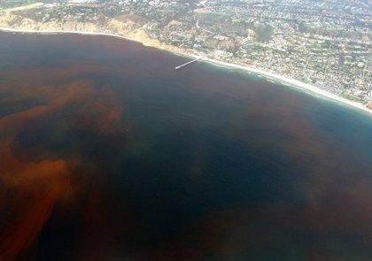 Unas 4.000 toneladas de peces, en riesgo sanitario en plena crisis por marea roja en Chile