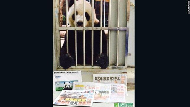Desmienten que el panda Tuan Tuan haya fallecido