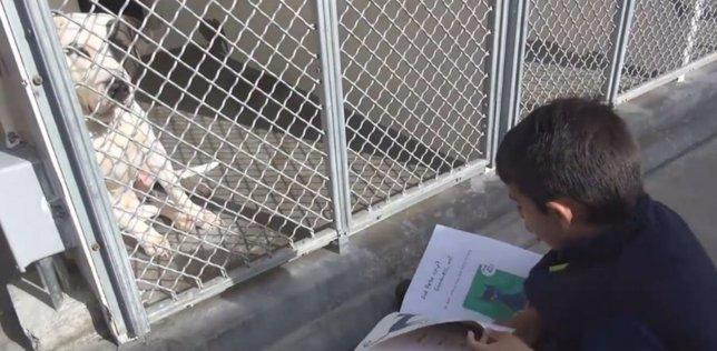 Niño de 6 años con autismo encuentra consuelo leyendo a los perros de un refugio