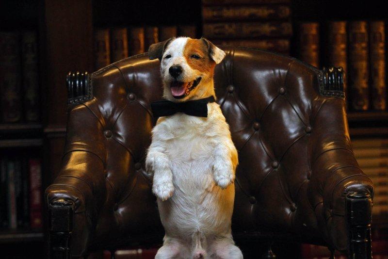 Muere a los 16 años Cook, protagonista de 'Pancho, el perro millonario'