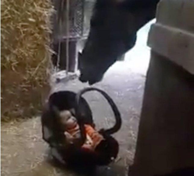 El instinto maternal de esta yegua hizo que reaccionara de esta manera con el be