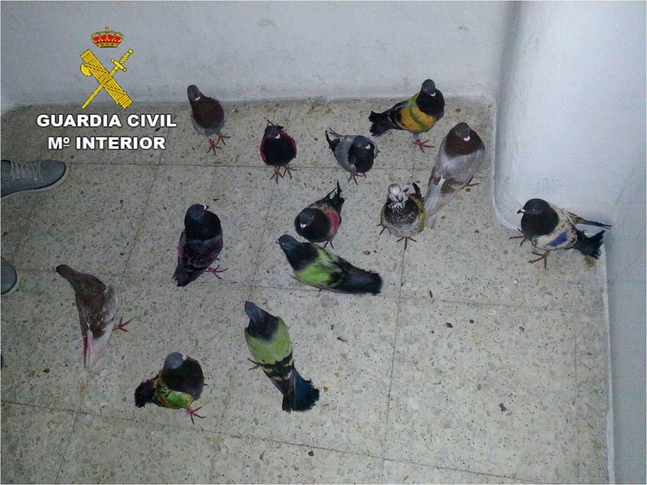 Aves recuperadas por los agentes
