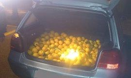 Investigan a cuatro personas por el presunto robo de 200 kilos de naranjas