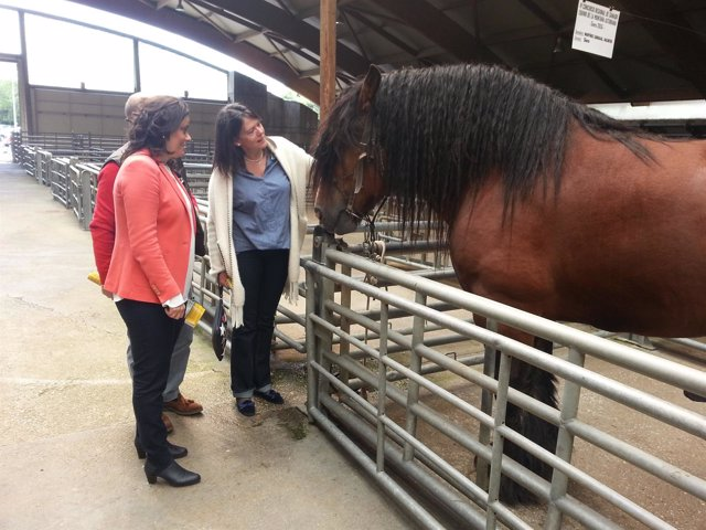 La candidata de PP-Foro visita concurso equino de Siero