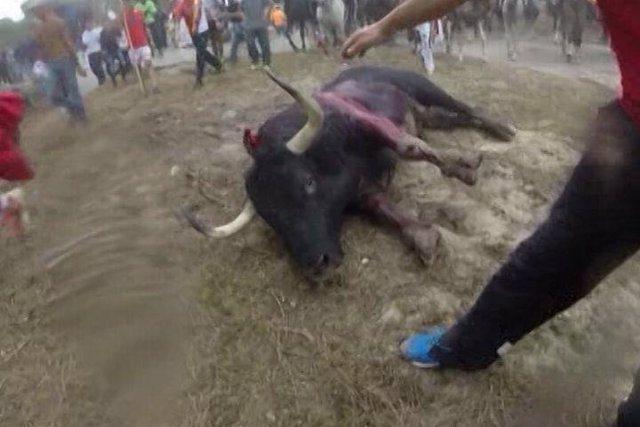 Castilla y León prohíbe matar al Toro de la Vega