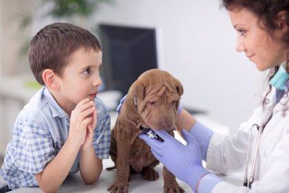Mascotas: principales dudas de los padres