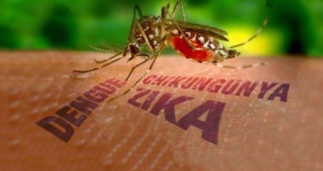 Primer caso de Zika en Chile transmitido por vía sexual