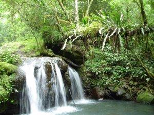 Reserva de Mata Atlántica del Sureste, Brasil