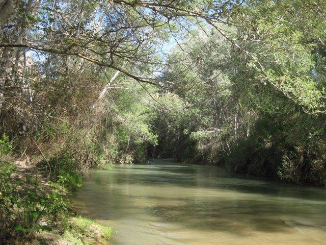 Óctonas Para Rep Oblar Los Márgenes Del Río Segura Y Favorecer La Colon Ización