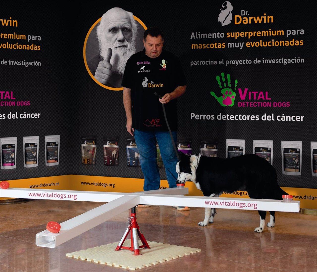 Perro realizando prueba de deteccion de cáncer de próstata Dr. Darwin