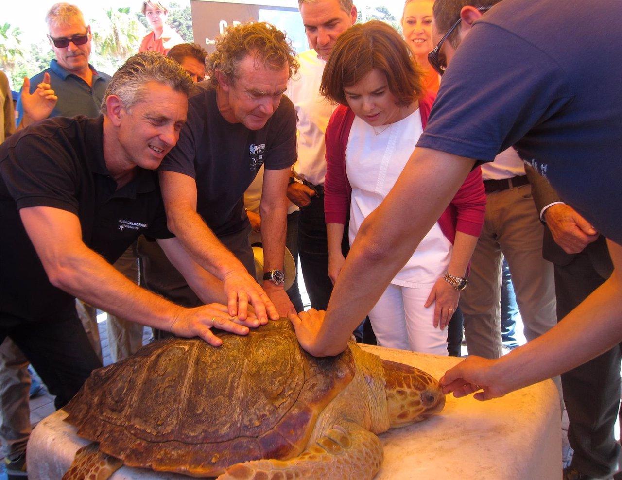 Soraya Sáenz de Santamaría tortuga liberada Aula del Mar Crema