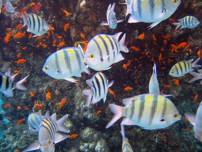 Peces en arrecife