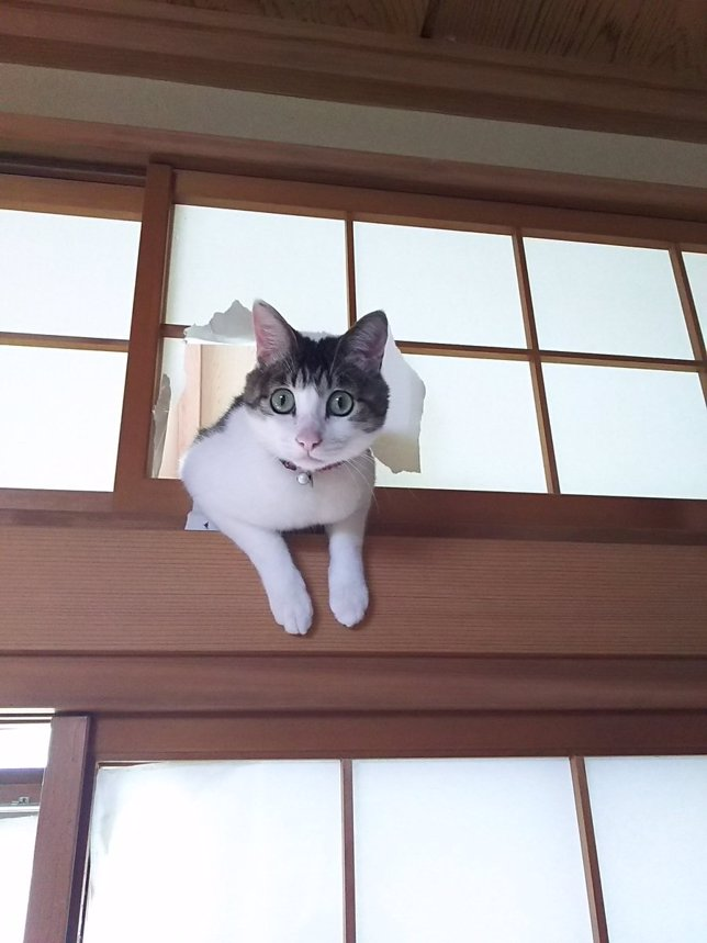 Gato rompe puertas