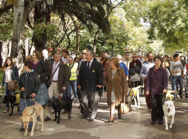 Manifestación de usuarios de perros guía en Madrid