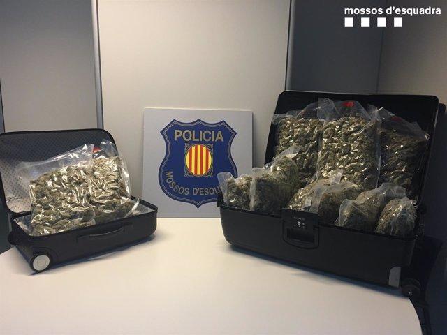 Un detenido por llevar 11 kilos de marihuana en autocar de Benidorm a Holanda