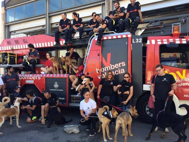 Bomberos de Valencia apoyan una campaña contra el abandono animal