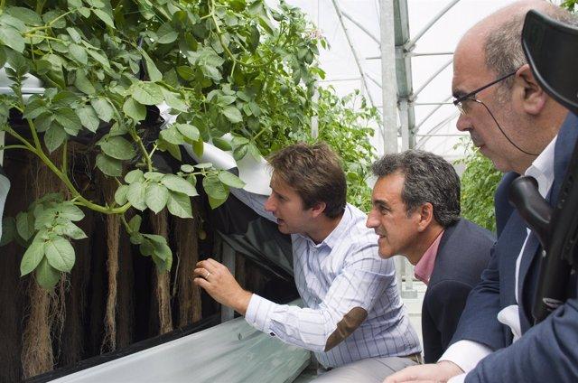 Visita a la pplantación de patatas en el aire