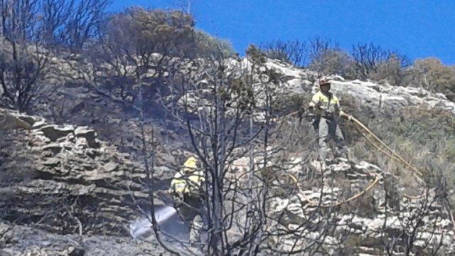 El fuego se ha originado en el paraje del Tamaral