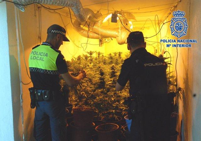 Detenidas dos personas con más de 140 plantas de marihuana