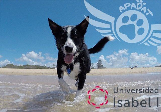 Universidad Isabel I y Apadat