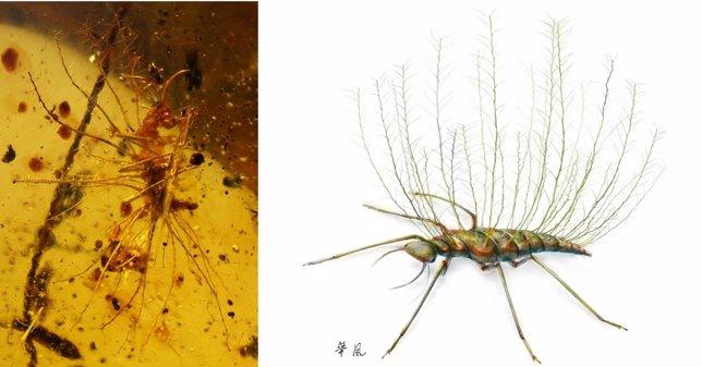Larva de crisopa disfrazada y al natural