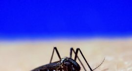 España suma 158 casos de Zika, todos importados