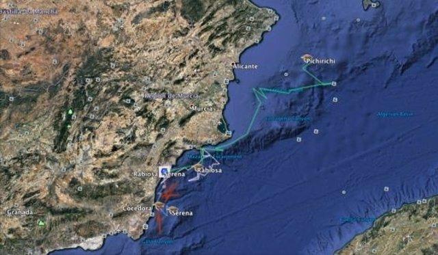 Ruta de tortugas boba liberadas en el Mediterráneo