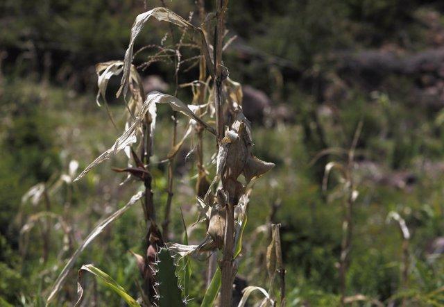 Sequía en Honuras