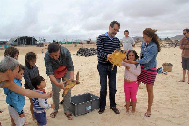 Devuelven dos tortugas al mar en Fuerteventura
