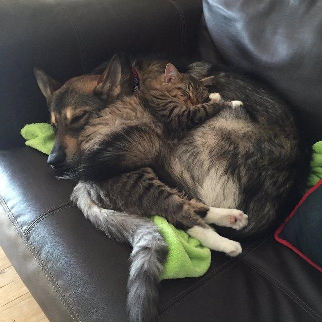 La adorable relación entre este perro y este gato