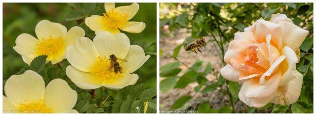 Insectos polonizando flores