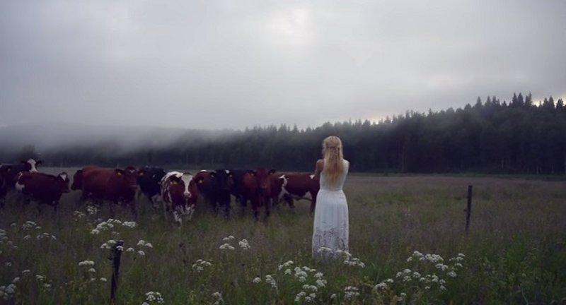 Esta mujer canta y las vacas se reúnen en torno a ella