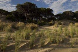 Luz verde en julio a los planes de ordenación y gestión de Doñana