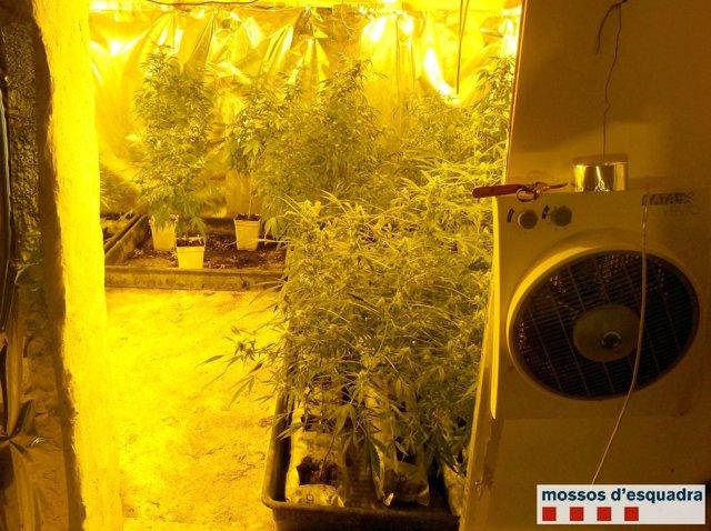 Almacén con marihuana en Gavarra