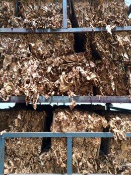 Tabaco en fábrica de Cetarsa