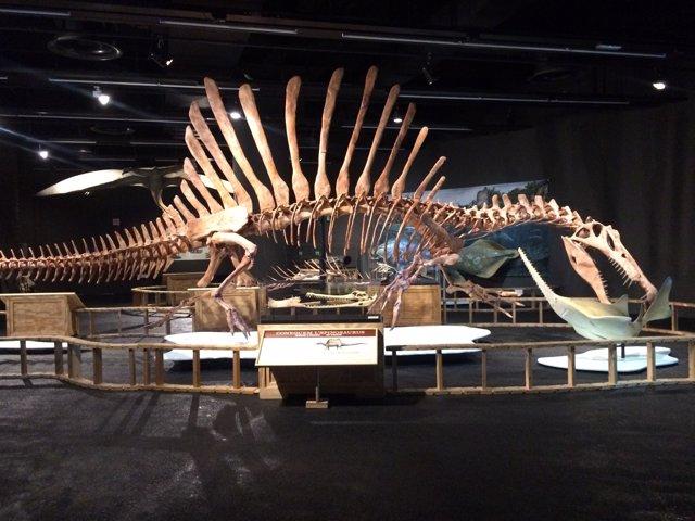 El Spinosaurus del Museu Blau