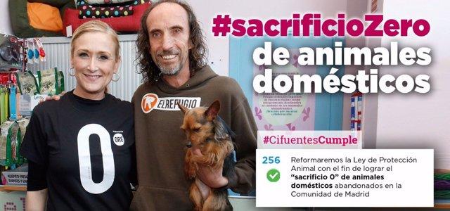 Sacrificio cero de animales en Madrid