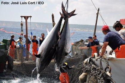 El Ministerio prohíbe la pesca deportiva y recreativa de atún rojo por el agotamiento de su cuota
