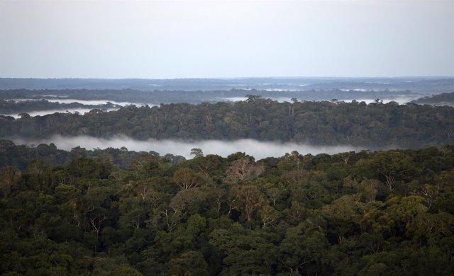 ¿Cuáles Son Los Bosques Más Amenazados De Iberoamérica?