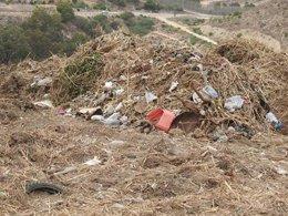 Vegetación en un espacio de Melilla
