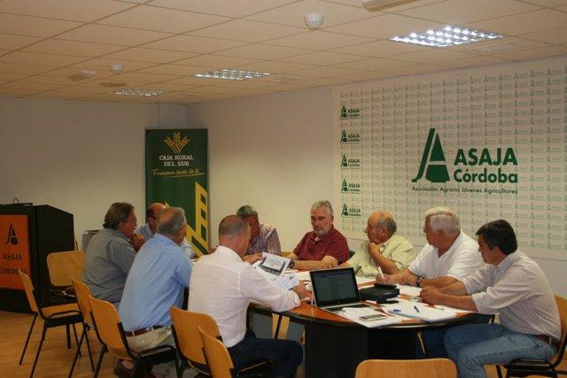 Reunión de la sectorial vitivinícola de Asaja-Córdoba