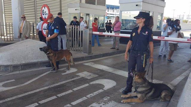 Arranca la 'operación Minerva 2016' en los puertos de Algeciras, Tarifa y Ceuta