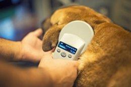 Lector de microchips de animales, perro, mascota