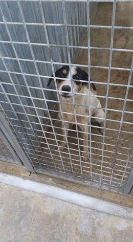 Perro capturado en Melilla