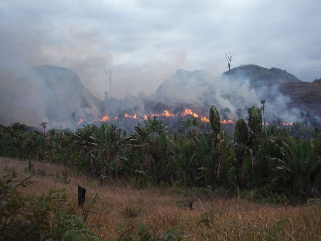 Incendio en bosque tropical
