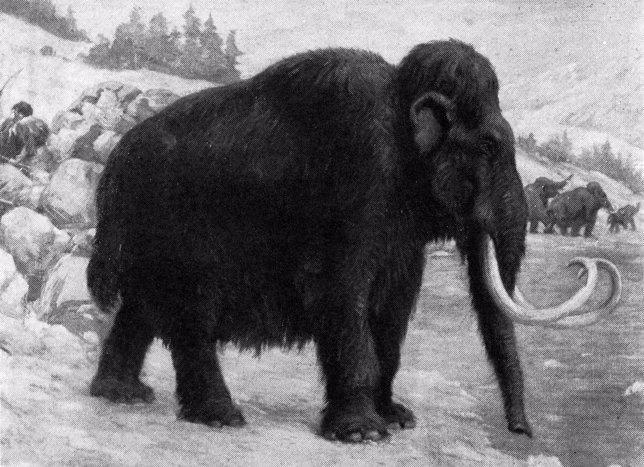 Dibujo de mamut lanudo