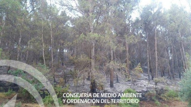 Incendio en la Puerta de Segura (Jaén)