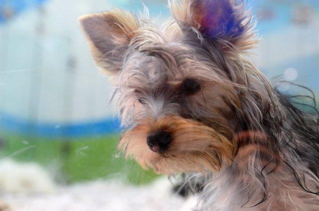 Animal, animales, perro, perros, cachorro, cachorros, perra, perras