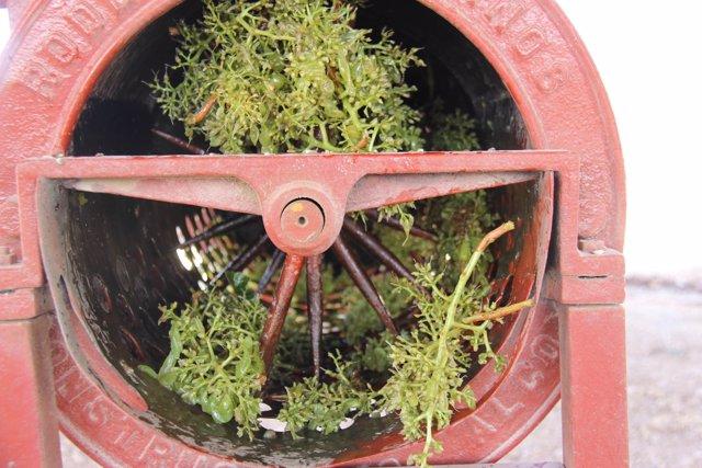 Parra Family Organic - producción de vino ecológico